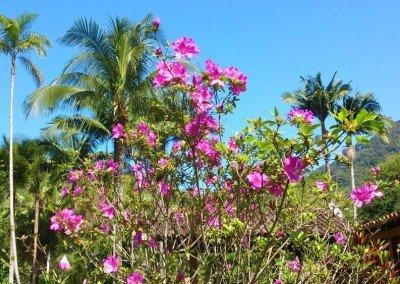 Pousada da Praia do Félix · Primavera